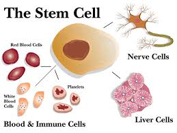 Stem cell paper