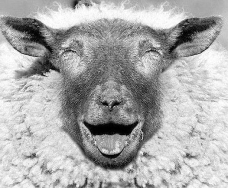 sheep essay Military sheep essays: over 180,000 military sheep essays, military sheep term papers, military sheep research paper, book reports 184 990 essays, term and research.