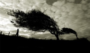trees in wind