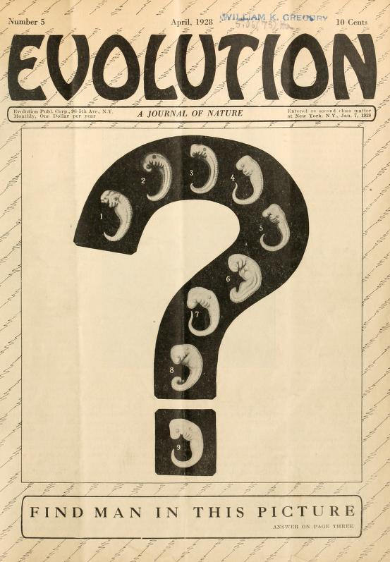 Haeckel's embryos as a question on the cover of a magazine that promoted evolution teaching after the Scopes trial. The answer was number 9.